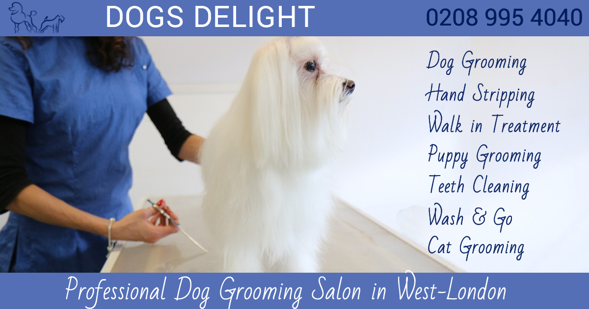Dog Grooming Services Chiswick London Dogs Delight