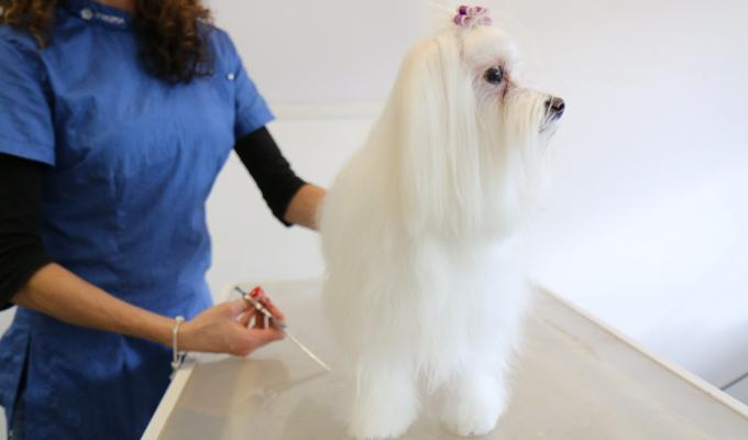 Dog Grooming Fees